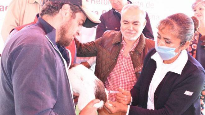 Vacunación antirrábica en Jalisco